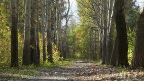 Callejón del otoño en el bosque