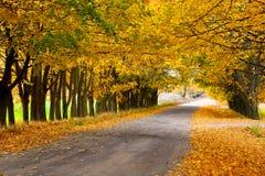 Callejón del otoño en el campo Imagenes de archivo