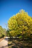 Callejón del otoño en luz del sol fotos de archivo