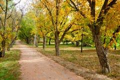 Callejón del otoño en luz del sol imagenes de archivo