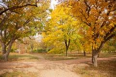 Callejón del otoño en luz del sol imágenes de archivo libres de regalías