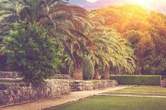 Callejón del paisaje en el parque en el verano Fotos de archivo
