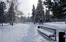 Callejón del parque de la ciudad con un banco en el primero plano durante las nevadas del invierno Imágenes de archivo libres de regalías