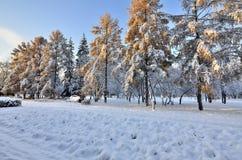 Callejón del parque de la ciudad después de las primeras nevadas Imagen de archivo libre de regalías