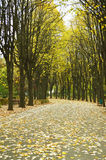 Callejón del parque del otoño Foto de archivo libre de regalías
