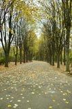 Callejón del parque del otoño Fotografía de archivo libre de regalías