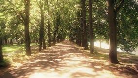 Callejón del parque en un día de verano soleado almacen de video