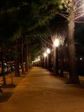 Callejón del parque por noche imagen de archivo libre de regalías