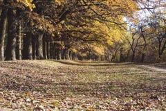Callejón del roble en otoño Foto de archivo