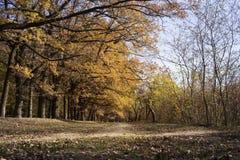 Callejón del roble en otoño Imagenes de archivo