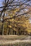 Callejón del roble en otoño Fotografía de archivo libre de regalías
