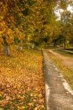 Callejón derramado con las hojas de otoño en el parque del otoño fotografía de archivo