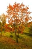 Callejón derramado con las hojas de otoño en el parque del otoño imágenes de archivo libres de regalías