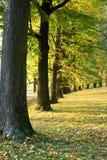 Callejón el otoño Foto de archivo