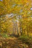 Callejón en bosque Imagen de archivo