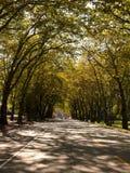 Callejón en campus de UW Foto de archivo libre de regalías