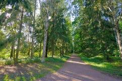 Callejón en el bosque Foto de archivo