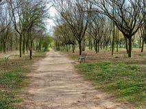 Callejón en el bosque Boulogne de la primavera en París Fotografía de archivo