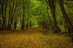 Callejón en el bosque del otoño Imagenes de archivo