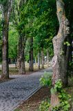 Callejón en el centro de ciudad Un pequeño oasis de los senderos pavimentados con las tejas y los árboles que franjan, lejos del  imagen de archivo