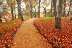 Callejón en el otoño con las hojas caidas - paisaje del otoño Imagen de archivo libre de regalías