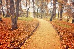 Callejón en el otoño con las hojas caidas - paisaje del otoño Fotos de archivo