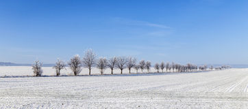 Callejón en el paisaje del invierno cubierto con nieve Foto de archivo libre de regalías