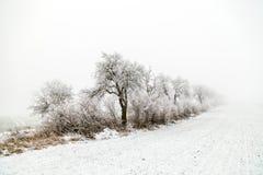Callejón en el paisaje del invierno cubierto con nieve Imagen de archivo libre de regalías