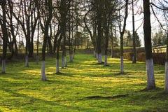 Callejón en el parque imagen de archivo libre de regalías
