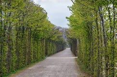 Callejón en el parque, Bayreuth, Alemania Imágenes de archivo libres de regalías