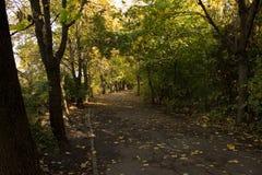 Callejón en el parque Camino en el parque del otoño Fotografía de archivo