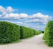 Callejón en el parque con exactamente los árboles del topiary fotos de archivo