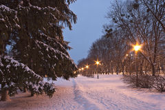 Callejón en el parque de la ciudad sobre la hora azul en invierno foto de archivo