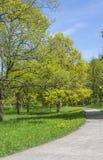 Callejón en el parque de la primavera Foto de archivo