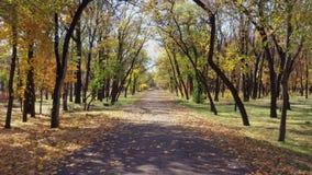 Callejón en el parque del otoño almacen de video