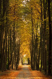 Callejón en el parque del otoño imágenes de archivo libres de regalías