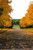 Callejón en el parque del otoño foto de archivo