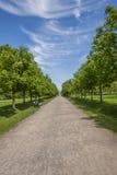 Callejón en el parque del verano Imagen de archivo libre de regalías