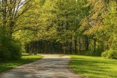 Callejón en el parque entre los árboles verdes claros Imagenes de archivo