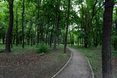 Callej?n en el parque entre troncos de ?rbol en un verano o un d?a de primavera imagen de archivo