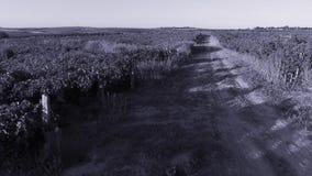 Callejón en el viñedo, campos de la agricultura