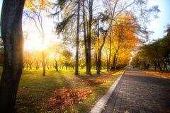Callejón en los árboles del parque del otoño con las hojas amarillas fotografía de archivo