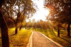 Callejón en los árboles del parque del otoño con las hojas amarillas fotografía de archivo libre de regalías