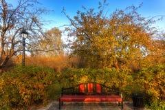 Callejón en los árboles del parque del otoño con las hojas amarillas foto de archivo libre de regalías
