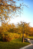 Callejón en los árboles del parque del otoño con las hojas amarillas fotos de archivo