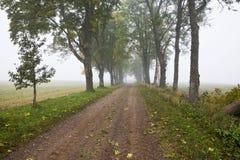 Callejón en niebla de la mañana fotos de archivo libres de regalías