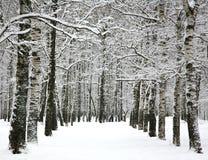 Callejón en parque de la ciudad del invierno Fotografía de archivo libre de regalías