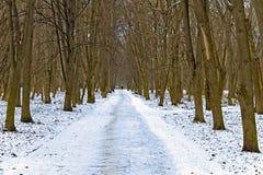 Callejón en parque del invierno Imagen de archivo