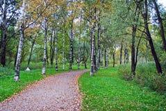 Callejón en parque del otoño Foto de archivo libre de regalías