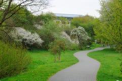 Callejón floreciente con los árboles en el parque en Fulda Imagen de archivo libre de regalías